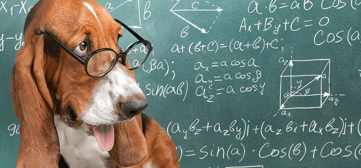 A cute dog doing some math